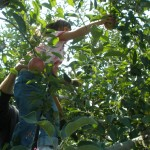 Apple Picking fun!