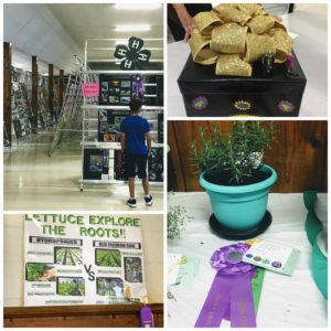 Projects at the 4-H Fair