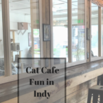 Cat Cafe and Vintage Shopping