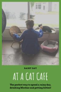 Nine Lives Cat Cafe