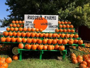 Pumpkins at Russell Farms