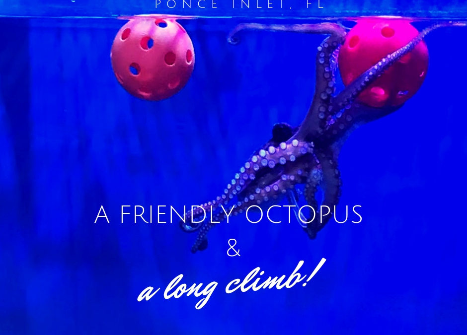 A playful octopus and a harrowing climb …