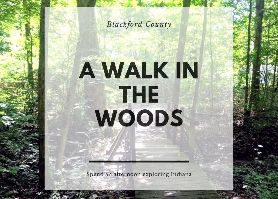 A Walk in the Woods in Blackford County