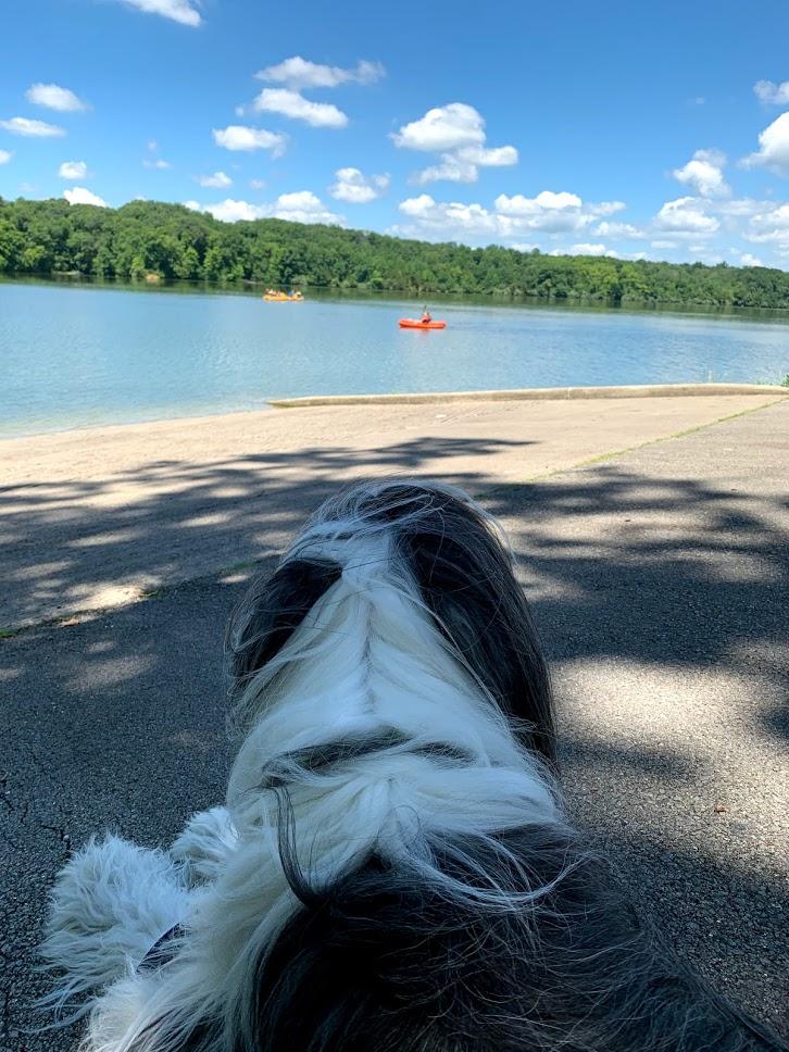 Bernie watching us kayak at Whitewater Memorial State Park