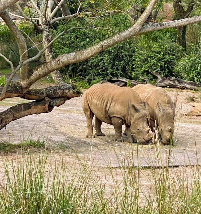 "Kiliminjaro Safaris is a ""Must-do"" at Disney's Animal Kingdom"