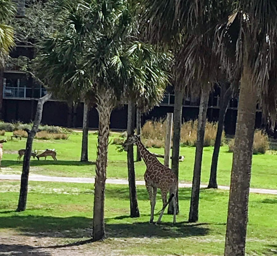 Check out the animals at Animal Kingdom Lodge
